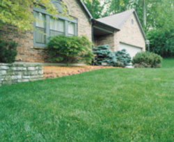 use an organic weed killer for a beautifuly natural healthy lawn!